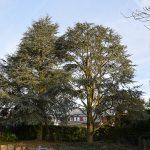 Élagage d'arbres dans la région de Soignies et Braine-le-Comte, Tubize, y compris Rebecq et Saintes