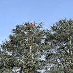 Élagage d'arbres dans la région d'Enghien, y compris Marcq, Petit-Enghien, Hoves, Silly