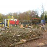 Le bois pourra être valorisé pour les scieries ou en bois de chauffage.