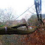 Travaux de démontage d'arbre